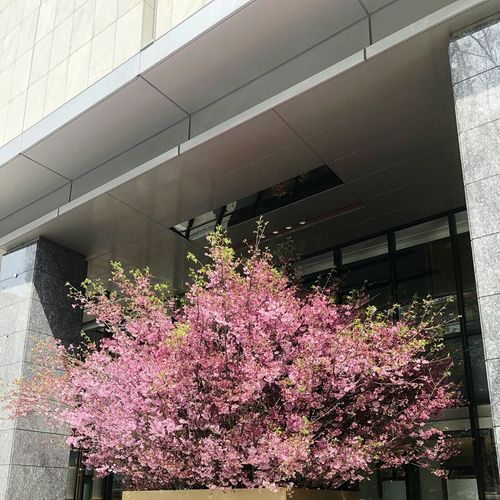 Flower Growth Plant Nature Springtime Blossom Day Architecture Built Structure Tree Outdoors No People Beauty In Nature Water Fragility Freshness