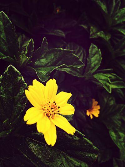 Flower Yellow Nature View
