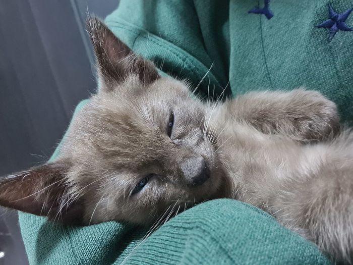 Close-up of kitten sleeping