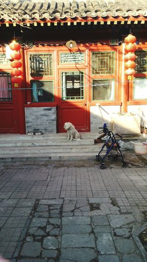 When the dog doesn't want to look at you. Outdoors China Dog Day No People Hutong Nostalgia