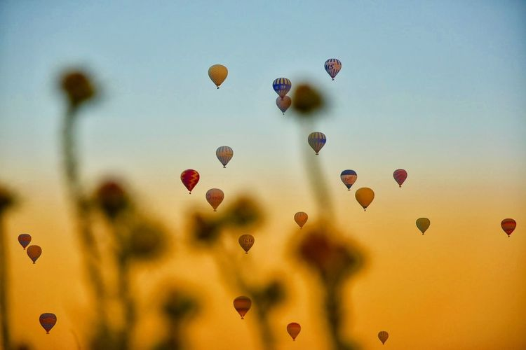 Hot Air Balloon Flower Multi Colored Sunset Sky Close-up Plant