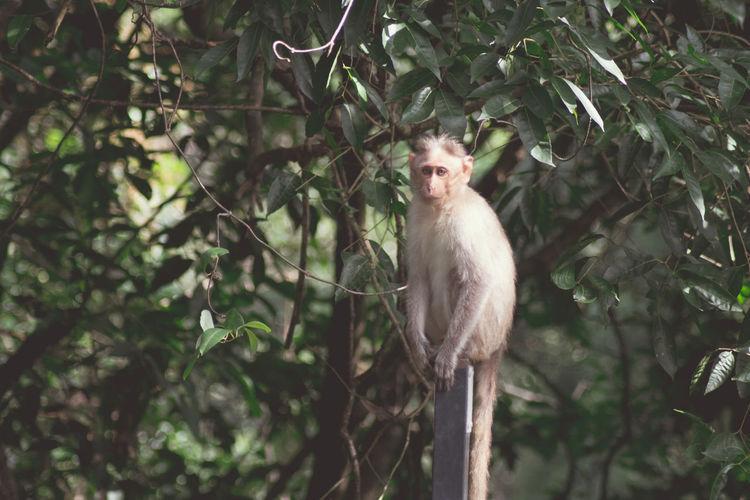 Portrait of monkey perching on tree