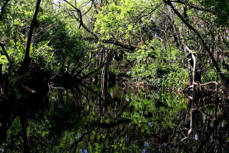Loxhatchee River, Florida everglades Adventure Day EyeEm EyeEm Best Shots EyeEm Gallery EyeEm Nature Lover EyeEmBestPics Florida Forest Lake Landscape Nature No People Outdoors Tree Water