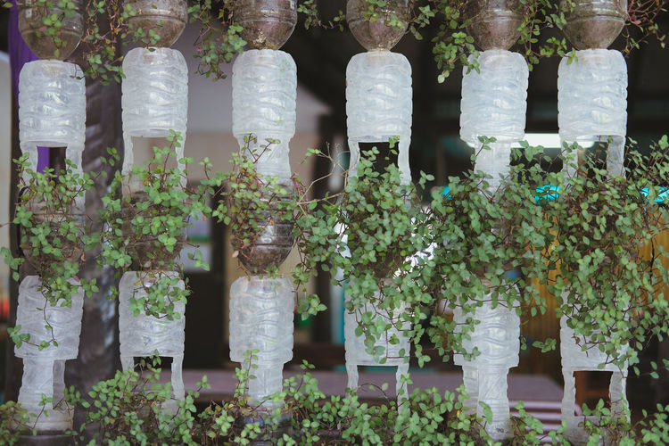 View of potted plants in plastic bottles