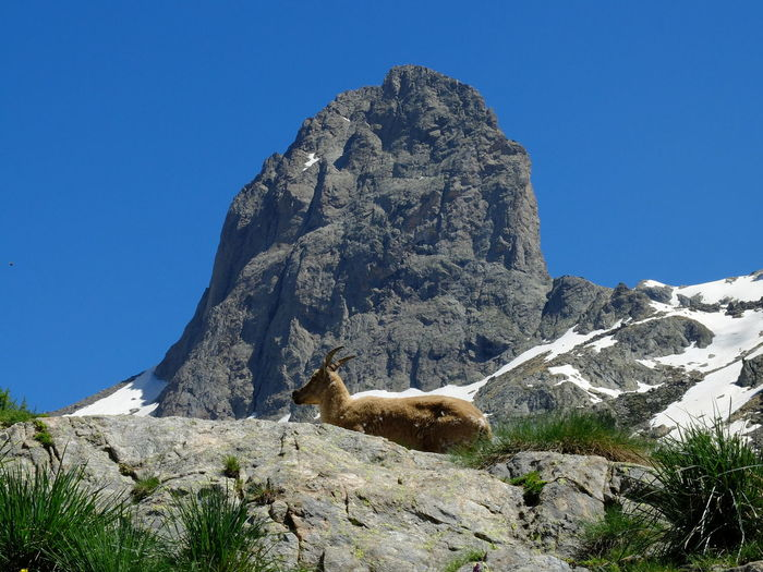 View of rock on mountain against clear sky