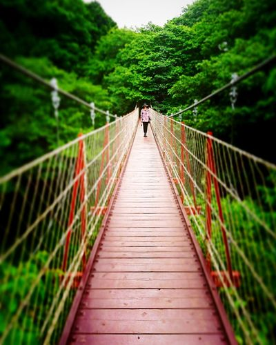 Footbridge Railing The Way Forward Bridge - Man Made Structure Travel Destinations People Nature Outdoors Suspension Bridge Adult Full Length One Person Forest Day Beauty In Nature Young Adult Adults Only 風景 色鮮やか Sky クレマチスの丘 Japan Photos Tree Japan Grass Japan