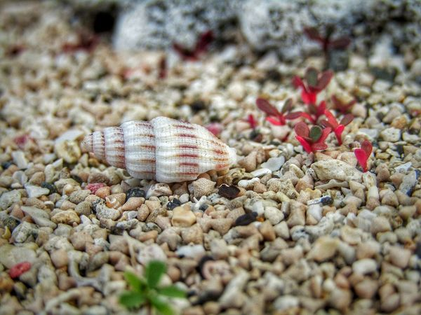 a tiny shell, tiny red weeds on the sands Bali EyeEmNewHere EyeEm Nature Lover Enjoying Life Sand Beach One Animal Animal Themes Animals In The Wild Nature Day Seashell Close-up No People Beauty In Nature Hermit Crab Outdoors EyeEm Ready