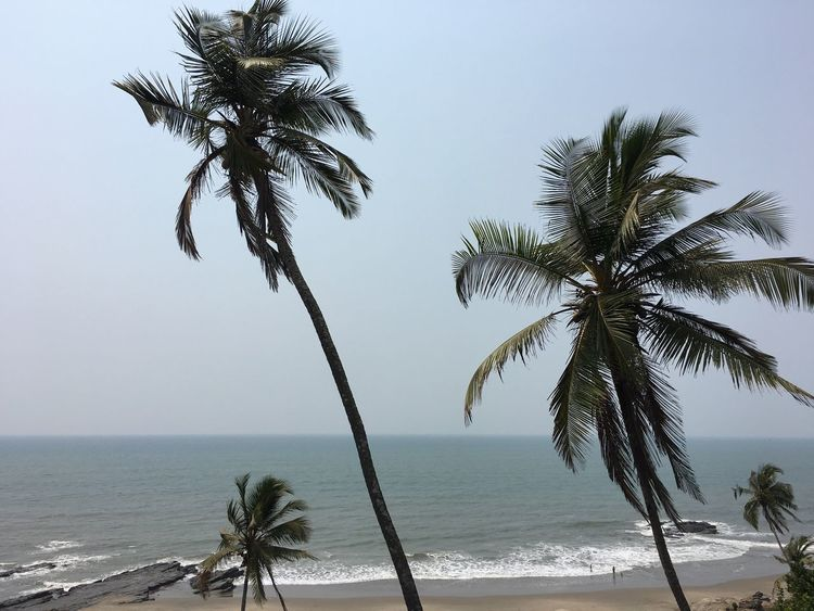 Having a lit time in India Palm Tree Beach Scenics Water Nature Sea Palm Frond Outdoors Clear Sky