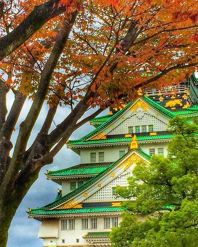 Osaka Castle - one of Japan's most famous landmarks. Built by Toyotomi Hideyoshi in 1583 , it played a major role in the unification of Japan in the sixteenth century Nature Naturelover Travel Autumn HDR Love Castle Picture Ig_today Natureaddict Insta Instagram Igaddict Ig_week Hdr_pics Rsa_nature Amazing Ig_myshot Likes Ig_daily Awesome Loveit Worldbestgram Insta_worldz Ig_week holiday japan osaka globalcapture trees