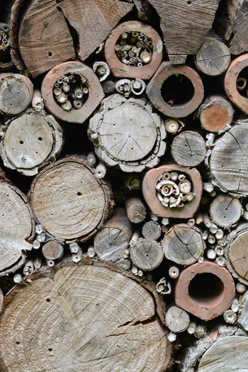 Bees Biodiversity Close-up Ecological Gardening Hibernation Insect Hotel Log Natural Materials Nature Conservation Nesting Facilities Outdoors Permaculture Pollinators Shelter Textured  Timber