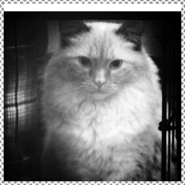 my cat halo