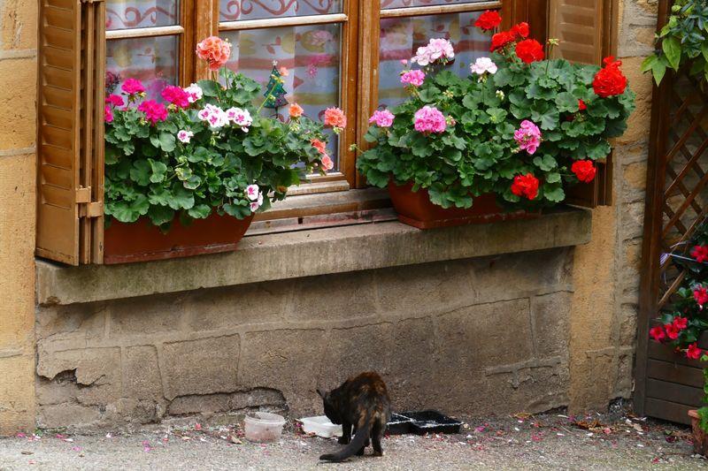 Flowers in window box over cat on sidewalk
