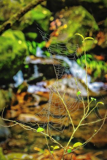 Backgrounds Full Frame No People Abstract Spider Web Close-up Pattern Wilderness Detail Getting Creative EyeEm Gallery Check This Out 😊 Getting Inspired Growth EyeEm Nature Lover Hellow World Artistic Expression Exceptional Photography My Unique Style EyeEm Best Shots Stream - Flowing Water Sunlight And Shadow Water - Collection Focus On Foreground Beauty In Nature Motion
