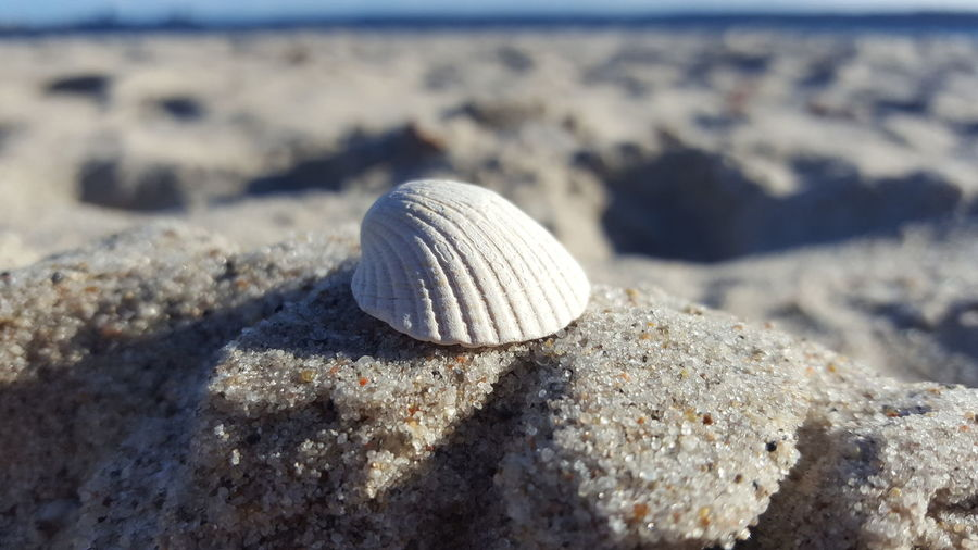 Muschel Sand Beach Nature Sea Close-up Sunlight Beauty In Nature Day Outdoors Fotographie_elocin Nature Focus On Foreground Germany Macro Macro Photography Macro Nature Beautiful Sunset Sun Beachphotography Muschel Muscheln Muschelschalen Canonphotography Beauty In Nature