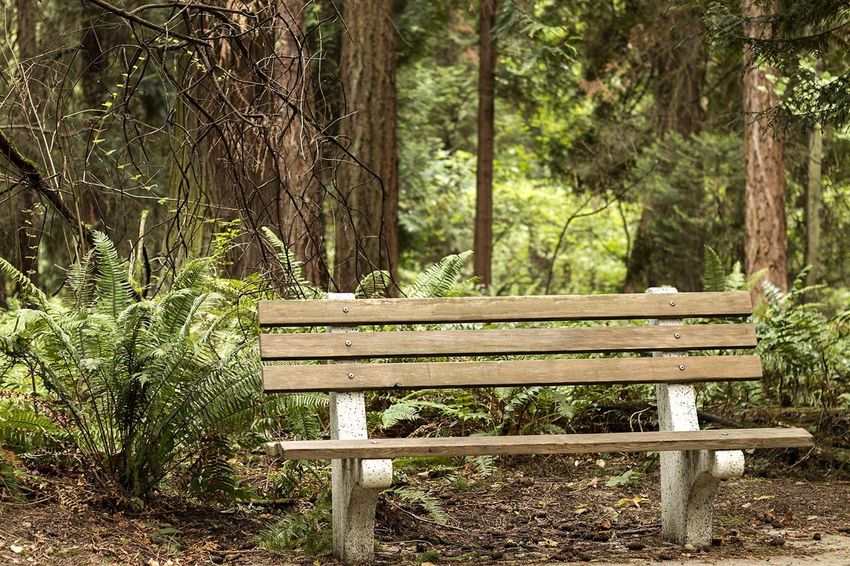 Bench Calm Day Ferns Footpath Forest Grass Outdoors Park Park - Man Made Space Park Bench Peace Peace And Quiet Tree Tree Trunk Wooden