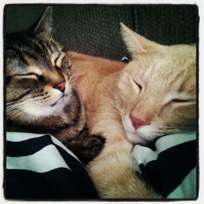 happy kitties, sleepy kitties, purr purr purr Meow SnuggleBuddies