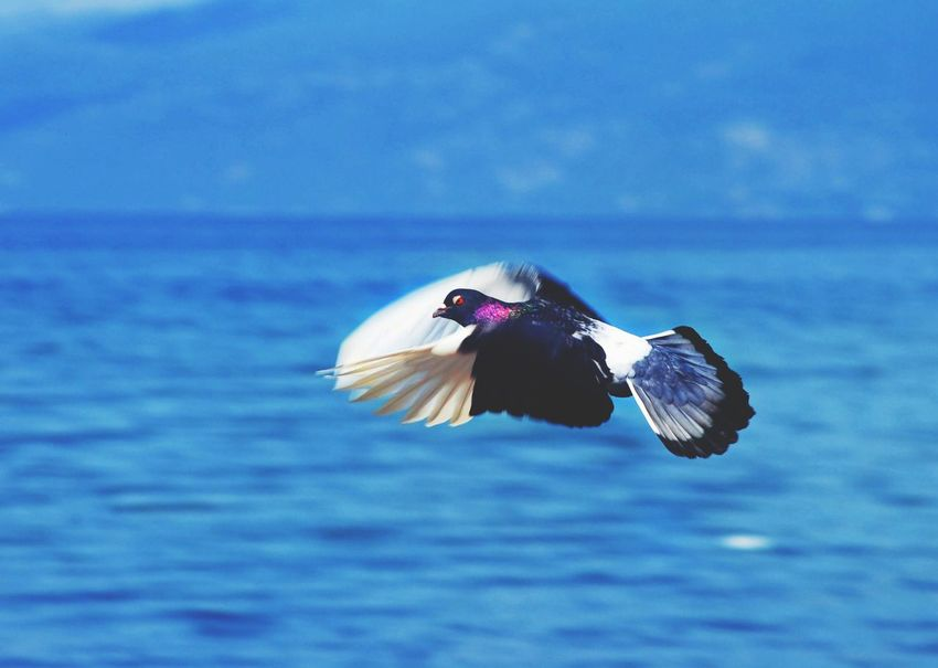 Action UnderSea Water Sea Swimming Beach Sea Life Blue Sky Close-up Horizon Over Water Spread Wings Flight Black-headed Gull