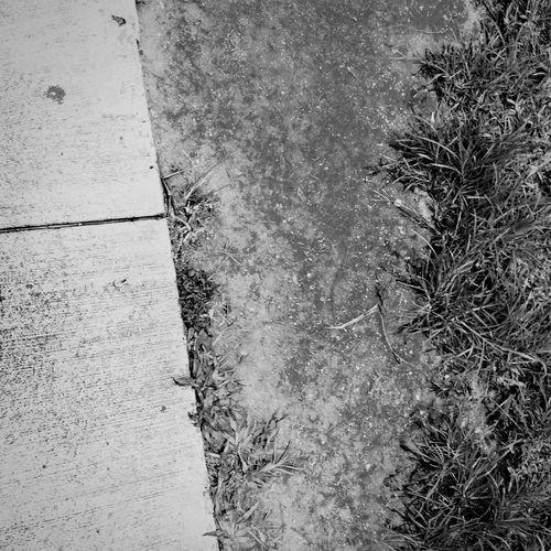 Puddle Wet Sidewalk Blackandwhite Grass