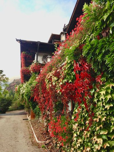 Red flowering plants by building against sky