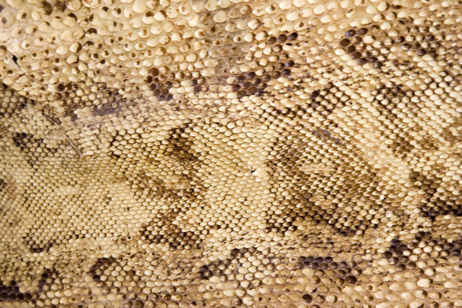 snake-skin closeup Natural Reptile Snake Textured  Textures And Surfaces Abstract Animal Themes Background Backgrounds Close-up Dermatology Detail Fiber Full Frame Material Nature Pattern Serpentine Skin Snake Skin Snake ♥ Snakes Snakes Are Beautiful Structure Textile