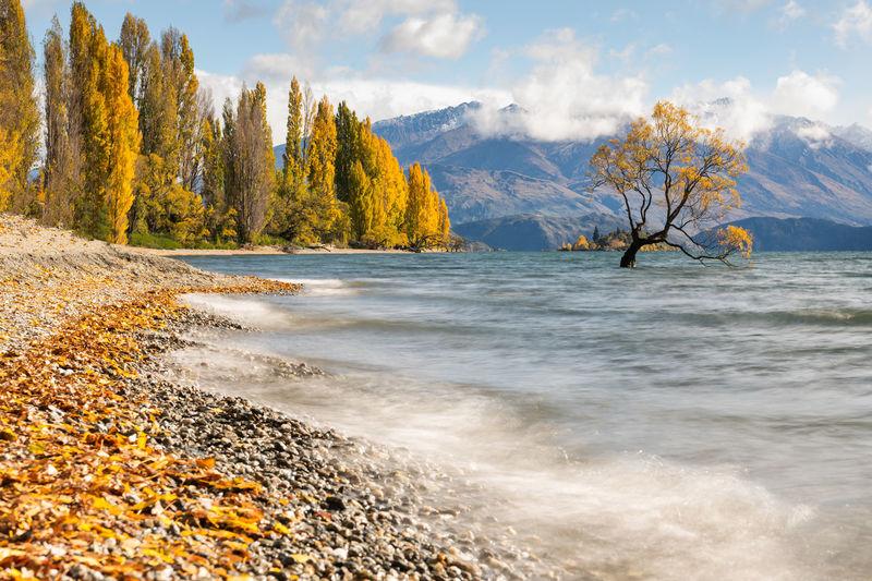 That Wanaka Tree Autumn New Zealand Scenery Wanaka, Beach Falls New Zealand Yellow Color