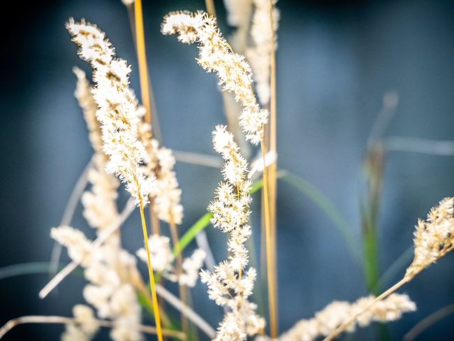 Plant Plant No People Day Nature Beauty In Nature Growth Close-up Plant Stem Freshness Focus On Foreground Selective Focus Outdoors Sunlight Fragility Flowering Plant Tranquility Textile