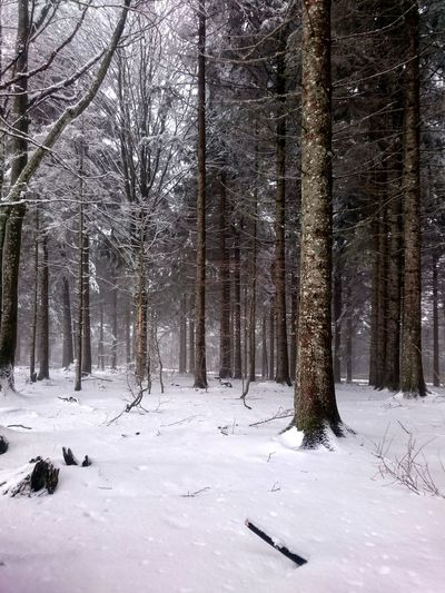 Blackforest Winter Germany Snow Trees Snow Day Wintertime Winterscapes Outdoors Nature Tranquil Scene Beauty In Nature Freiburg Cold Cold Temperature Uncomfortable Snowing Weekend Activities Activities Mountains