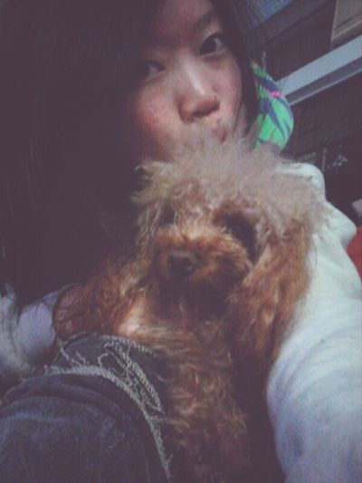 Choco Dog HongKong Girl Cute Chok Poodle