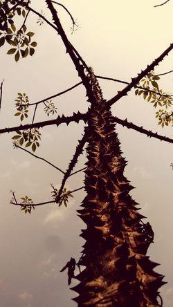 😈😈😈 Tree Water Branch Silhouette Bird Rural Scene Sunset Sky