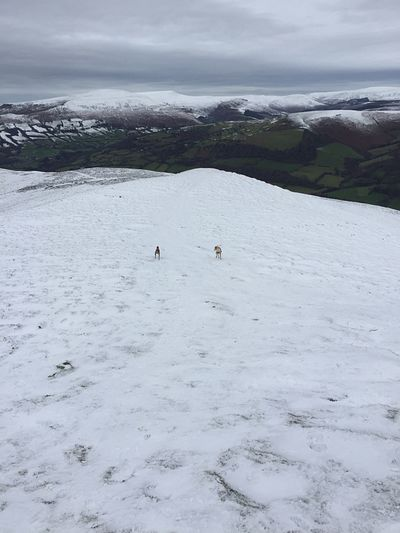 Dogs And Snow Snowy Mountains Brecon Beacons Sugar Loaf Abergavenny Pen Y Fan Walking The Dogs The Great Outdoors With Adobe Feel The Journey