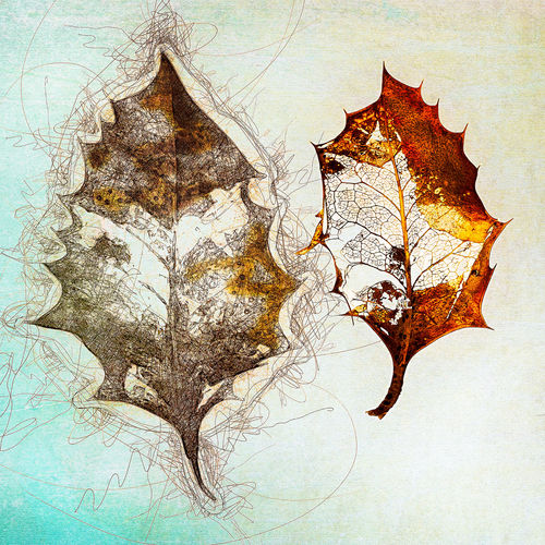 Holly Art And Craft Indoors  Nature No People Pattern Studio Shot Paper Tree Close-up Creativity Map Leaf White Background Emotion Abstract Paint Digital Composite Maple Leaf Textured Effect