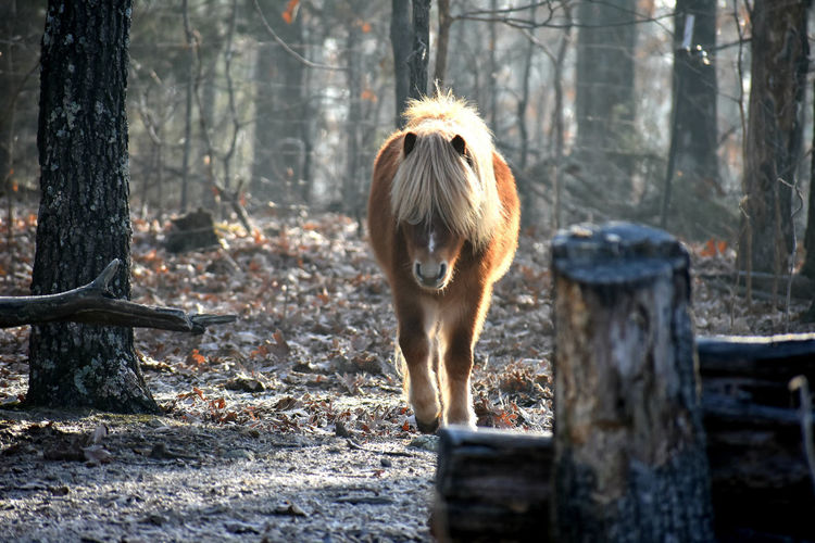 Horse standing on tree trunk in forest