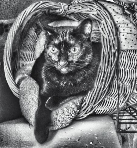 Monochrome Photography freedom the Guardian of in house Domestic Animals Pets One Animal Portrait Domestic Cat Close-up Feline Cat Black And White, Black And White Photography, Urban Exploration, Urban Decay, Classic B&W, Vintage B&W, Black And White Photography Adopt A Shelter Pet Adopt To Save A Life