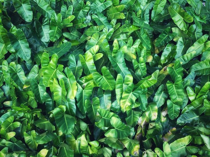 The beauty of the leaves of Texture Wall Leaves Green Spring Full Frame Green Color Backgrounds Leaf Plant Part Growth Plant Nature Beauty In Nature Close-up High Angle View Freshness
