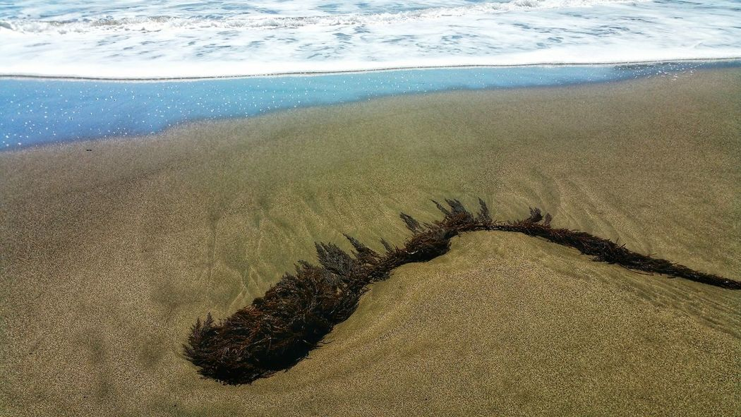Sea Art in the sand. Diagonal Seaweed Sea Vegetation Vegetation Art Abstract Unique Curve Background Zen Moment Copy Space Sand Beach Water Sea Beach Sand Wave Sunlight Shore Close-up Sky Sandy Beach Surf Calm Tide Coast Ocean Coastline