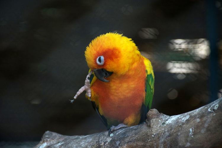 Sunny parrot