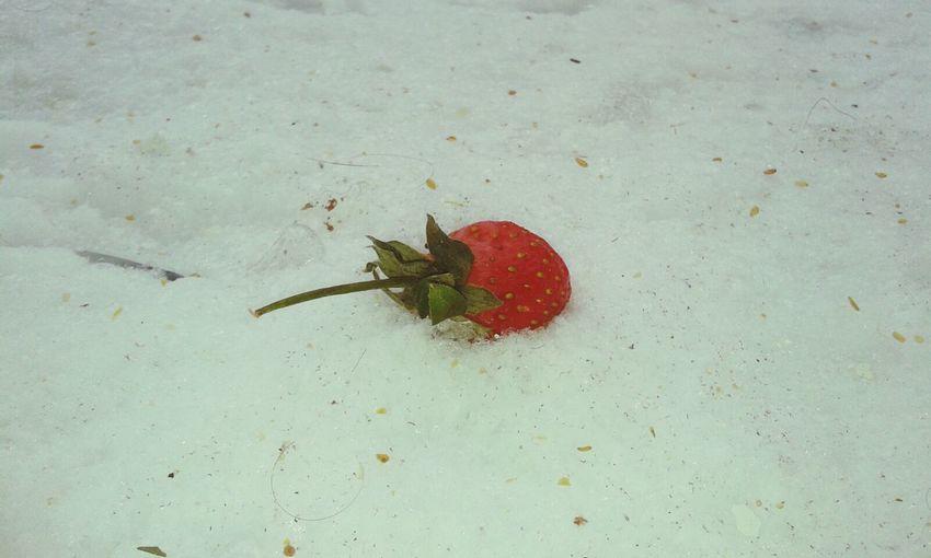 Timeless Winter Strawberry