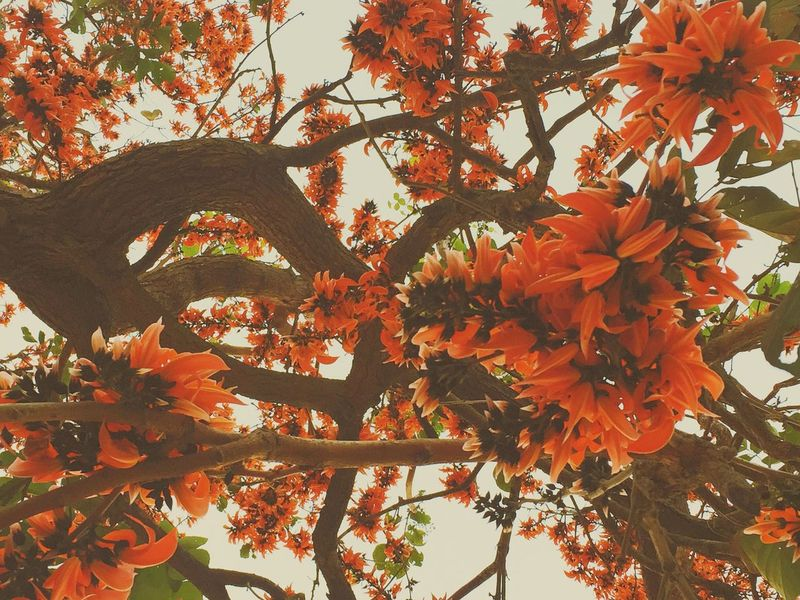O R A N G E Flowers Orange Thailand Thailand_allshots Vscocam