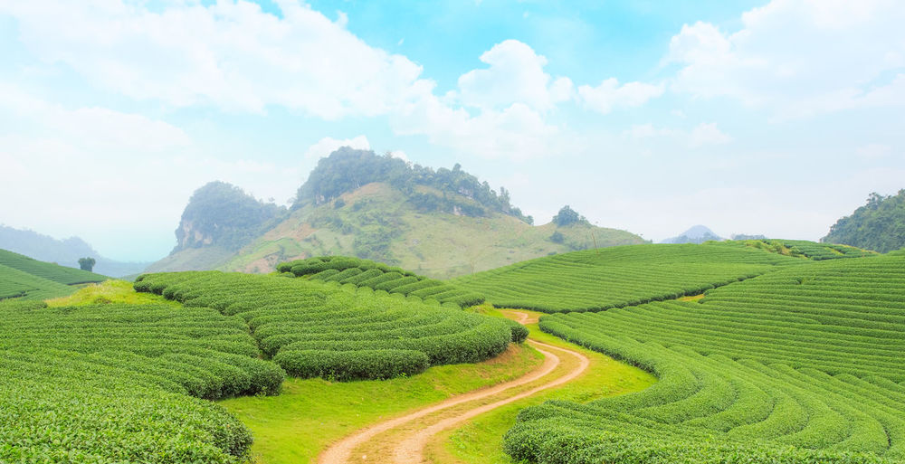 Agriculture Beauty In Nature Cloud - Sky Crop  Environment Farm Field Green Color Growth Land Landscape Mountain Nature No People Outdoors Plant Plantation Rural Scene Scenics - Nature Sky Tea Crop Tranquil Scene Tranquility