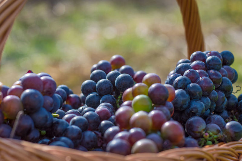 Close-Up Of Red Grapes In Basket