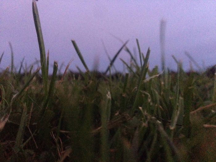 I've been sitting in a lot of open fields lately Field Close-up Surface Level Growth
