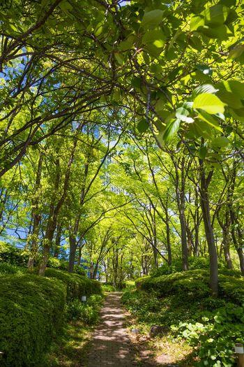 オフィス街の新緑小径 Japan Photography OSAKA Japan Fresh Green Tree Branch Forest Lush Foliage Leaf Green Color Landscape Sky Tree Trunk Treelined