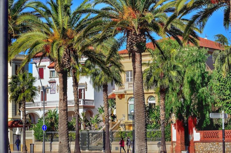Xalets al Passeig Jaume I de Salou Palm Tree Architecture Passeig Jaume I Salou Modernisme_catala