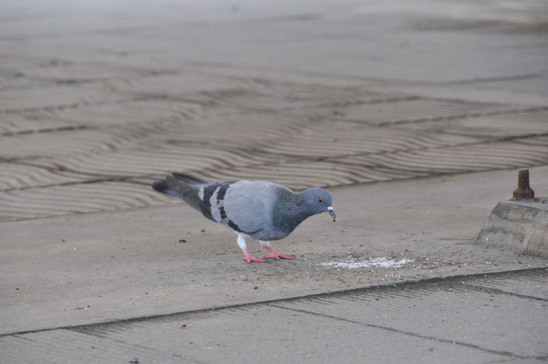 Animal Themes Animal Wildlife Animals In The Wild Beach Bird Close-up Day Nature No People Outdoors Sand Seagull Water
