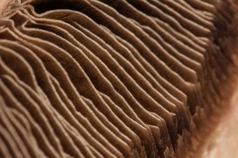 Arid Climate Backgrounds Beach Brown Close-up Day Desert Full Frame High Angle View In A Row Macro Mushroom Natural Pattern Nature No People Outdoors Pattern Repetition Sand Sunlight Textured  Wave Pattern