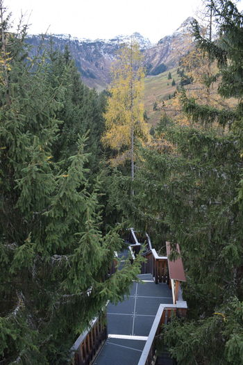 Forest Mountain Tree Treetop Walkway Saalbach Hinterglemm