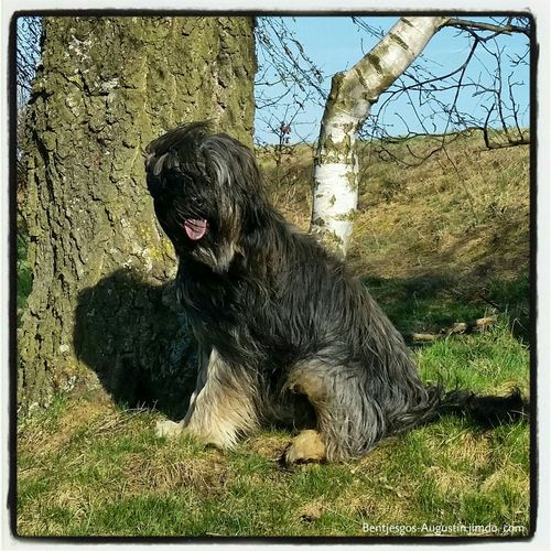 Bentjesgosaugustin Gos D'atura Landscape Nature Dog Walking I Love My Dog Mydog Ilovemydog Dog