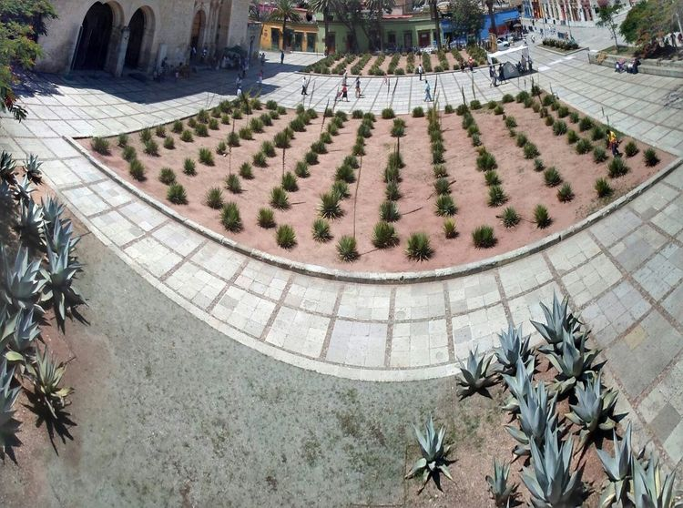 High Angle View Day Outdoors History Architecture Tree Built Structure Palm Tree Nature No People Architecture