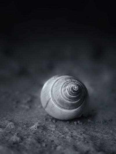 Black And White Seashell A Lone Close-up Backgrounds Nature