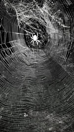Close-up Pattern Backgrounds Web Spider Web Spider On Web Big Web Round Round Shape Insect Black And White Monochrome Natures Diversities Beauty In Nature Outdoors Structure And Nature Architecture And Nature Natures Architecture Insect Architecture Nest Trap Insect Trap Lines And Shapes Lines And Patterns Patterns In Nature